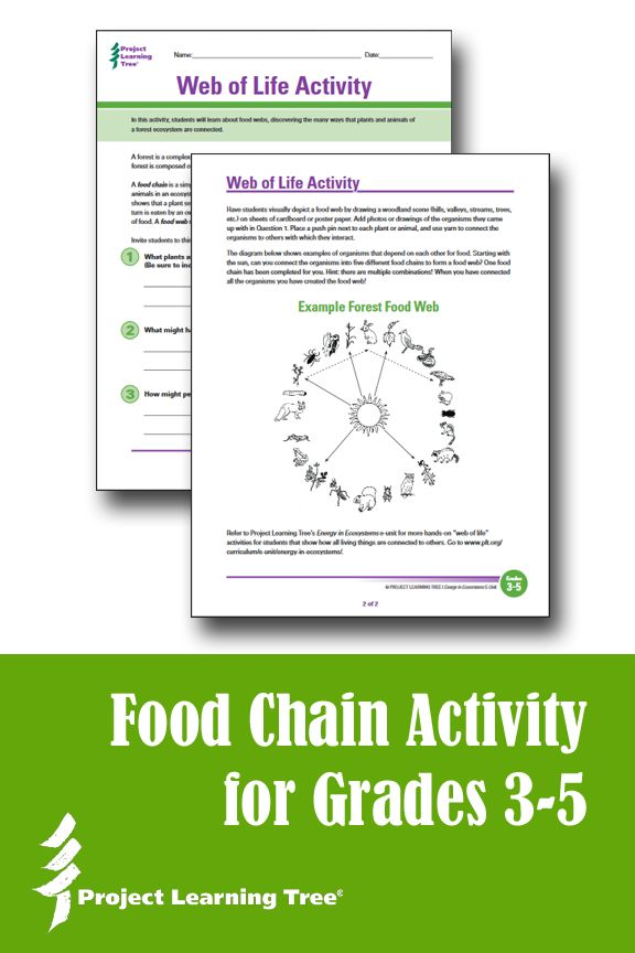 Web of Life worksheet and activity for grades 3-5: This hands-on activity helps students in grades 3-5 put their new knowledge about food chains and food webs into practice. It also explores interdependent relationships in ecosystems as part of the Next Generation Science Standards (NGSS). Include this activity and worksheet in a lesson plan about ecosystems. Free printable!
