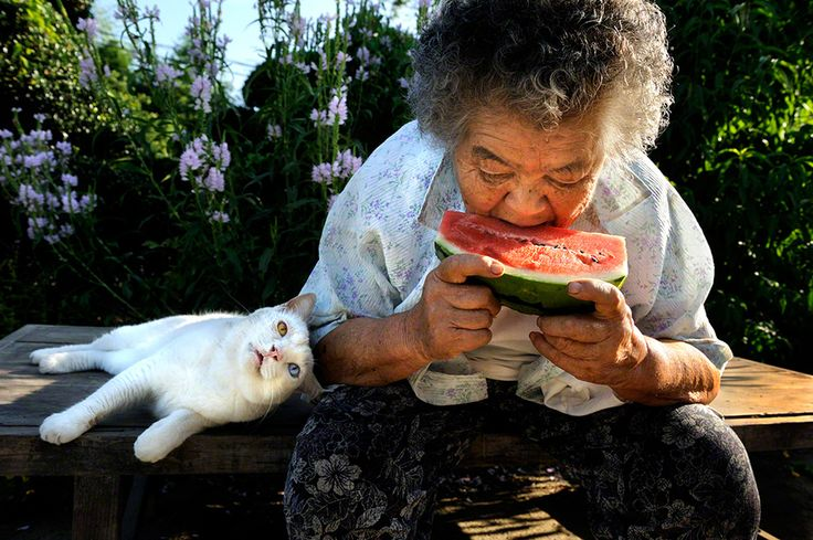 8 years ago Misao, now 88 years old, found a kitten in an abandoned shed. Since then they've been inseparable. This lovely collection of photos taken by her grand-daughter.