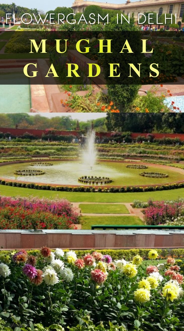 Fancy witnessing the colors of spring in full bloom but unable to book your tickets to faraway lands? If you live in Delhi, or are visiting Delhi during February/March, and want a quick detour to a fantasy land, head out to our very own Mughal Gardens at