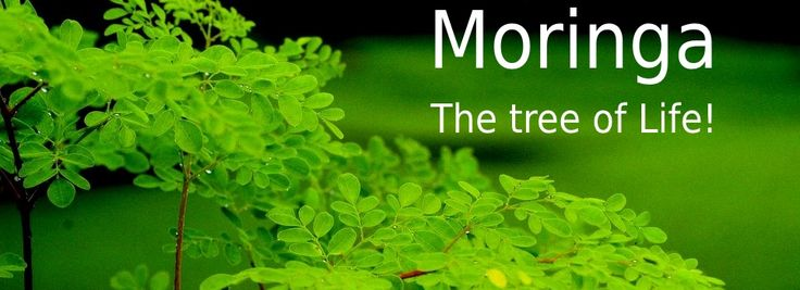 Health Benefits of Moringa - Tree of Life - http://natureandnutrition.com/health-benefits-of-moringa-tree-of-life/