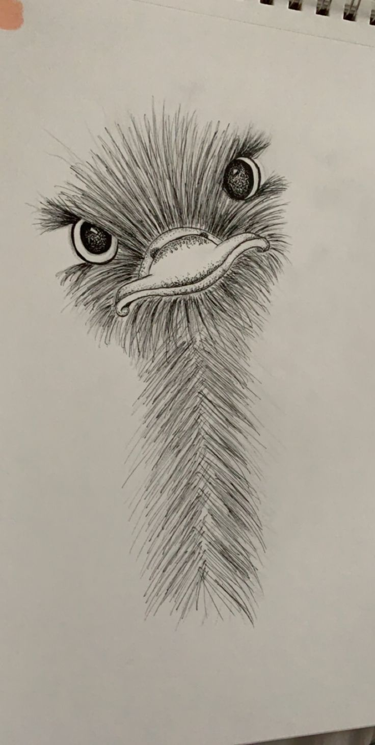 little ostrich friend :) #art #animalart #drawing …