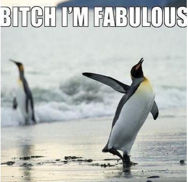 Fabulous penguin!! | Penguins | Pinterest | Penguins ...