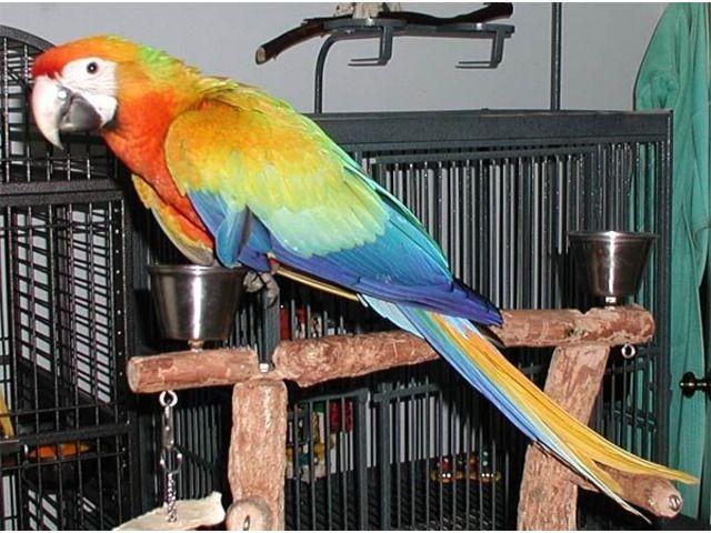Parrotsandfertileparroteggsforsale   birds101   Parrot, Eggs