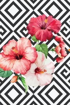 White & Flowers summer hibiscus wallpaper