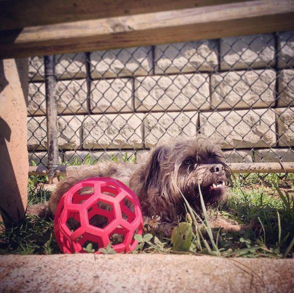 Laying low at Huntington Pet Safe Dog Park at Ritter Park - Huntington, WV - Angus Off-Leash #dogs #puppies #cutedogs #dogparks #huntington #westvirginia #angusoffleash