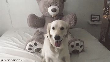 Teddy bear trust fall | Gif Finder – Find and Share funny animated gifs