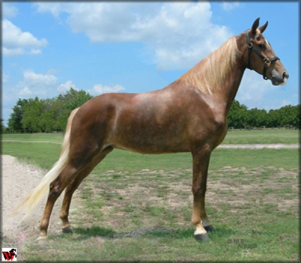 Liver Chestnut Horse With Flaxen Mane And Tail - photo#22
