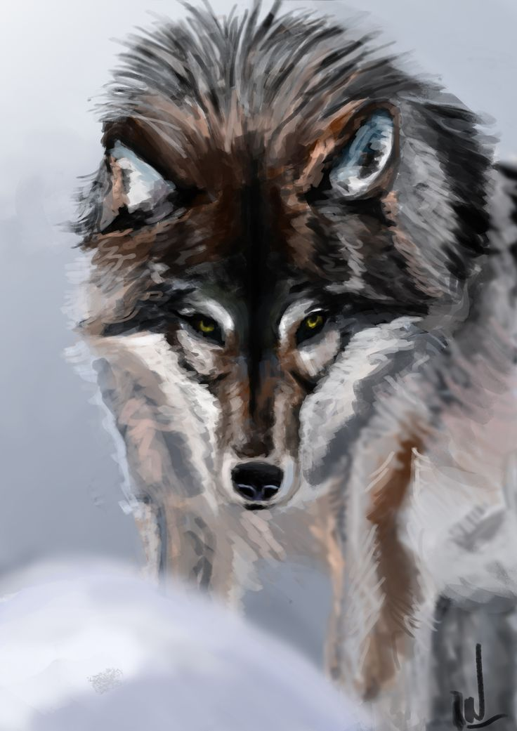 Photostudy of Wolf