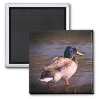 Drake photo 2 Inch Square Magnet - home gifts cool custom diy cyo