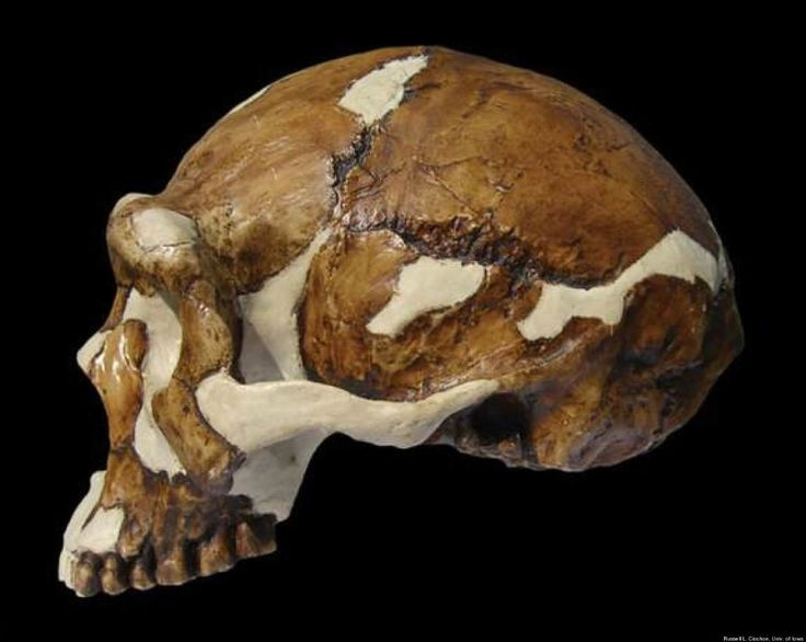 """Man from Beijing. It was the skull of a """"homo erectus"""" discovered in 1923 in a village in Beijing. Disappeared in 1941, when Japan invaded the country."""