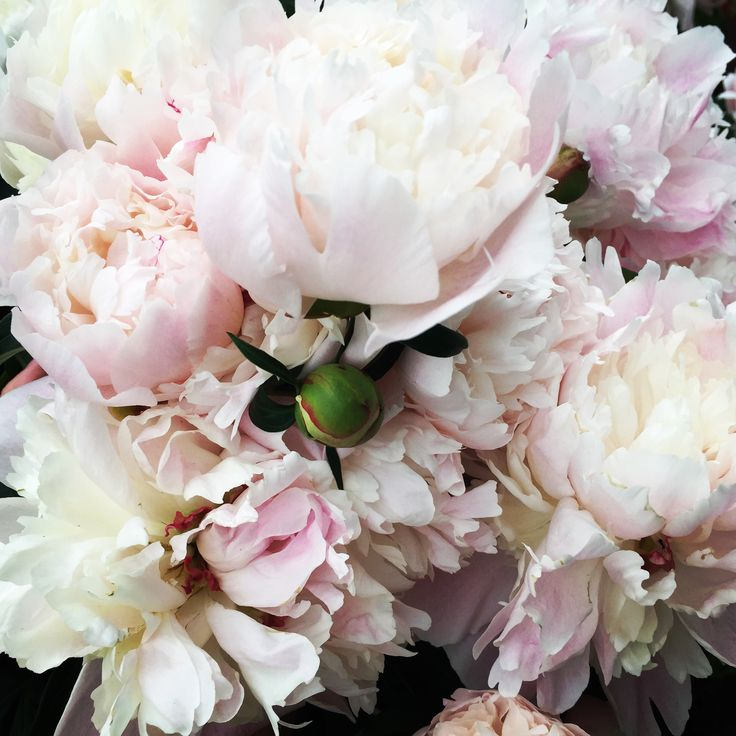 Flowers, pions