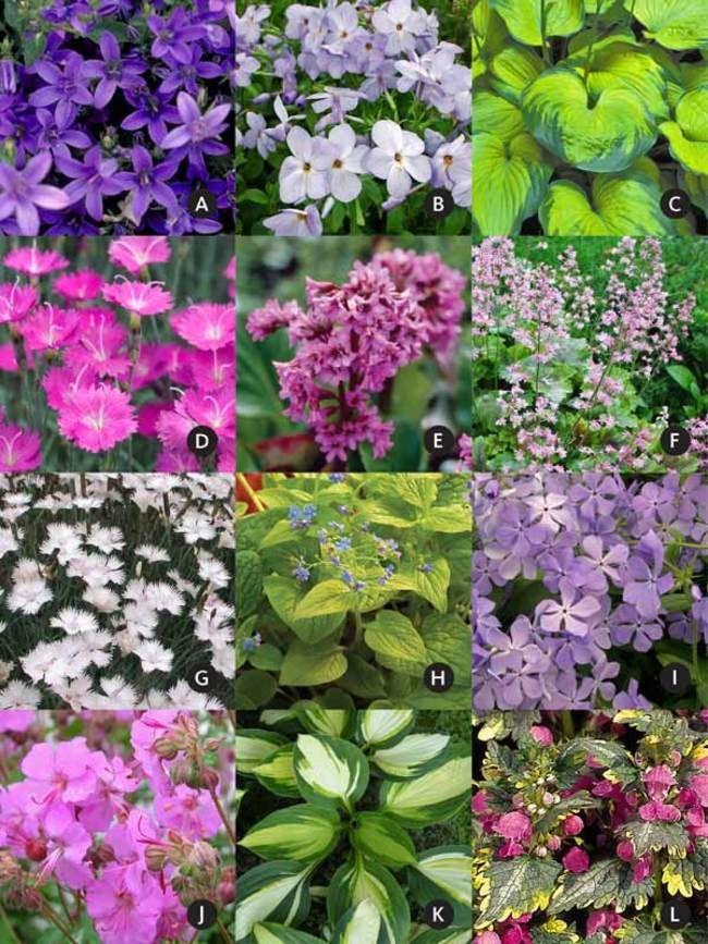Pre Planned Flower Garden Designs: Under A Small Tree Garden (Garden Design And Plants)