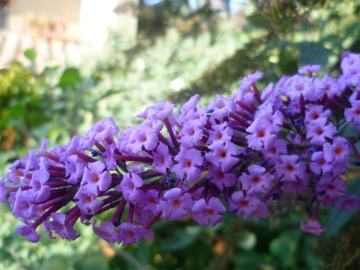 Su color alegra nuestro jardín.
