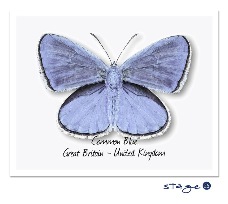 Stage 26 : Great Britain