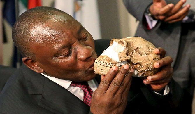 Largest fossil discovery at Cradle of Humankind | The New Age Online