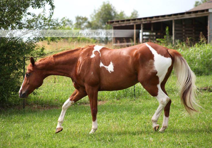 Images Of Paints Horses