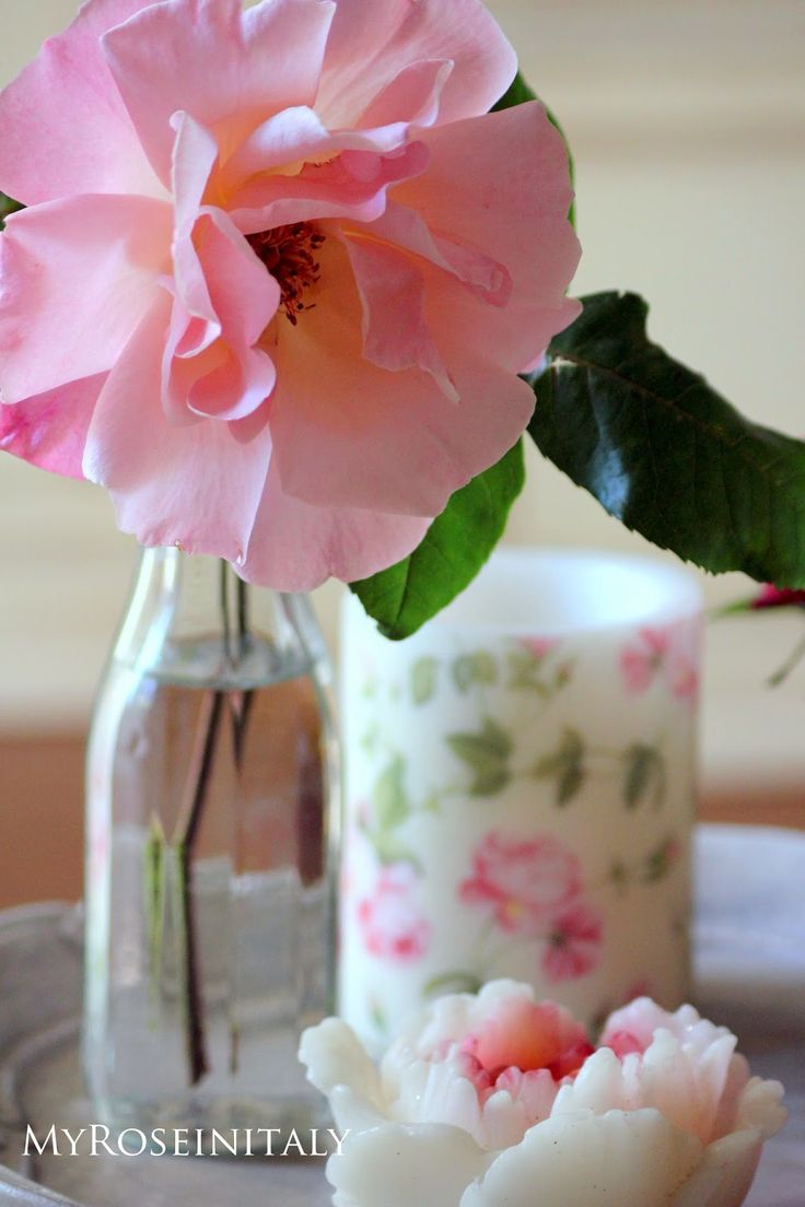 Una singola rosa rosa