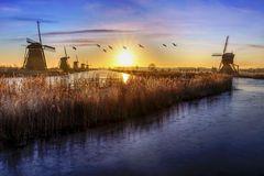Gansos voando sobre o nascer do sol sobre os moinhos de vento congelados alinhamento de Stock