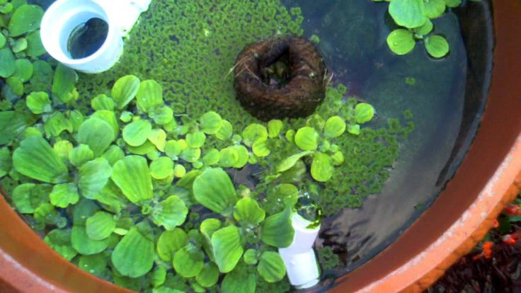 249 best koi pond filters images on pinterest pond for Koi pond return jets