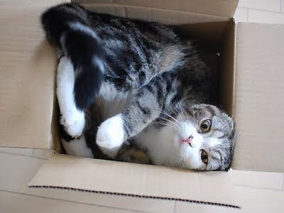 maru cat loves boxes and any other box-like places that he can get into & 13 best Maru the Japanese Cat images on Pinterest | Japanese cat ... Aboutintivar.Com
