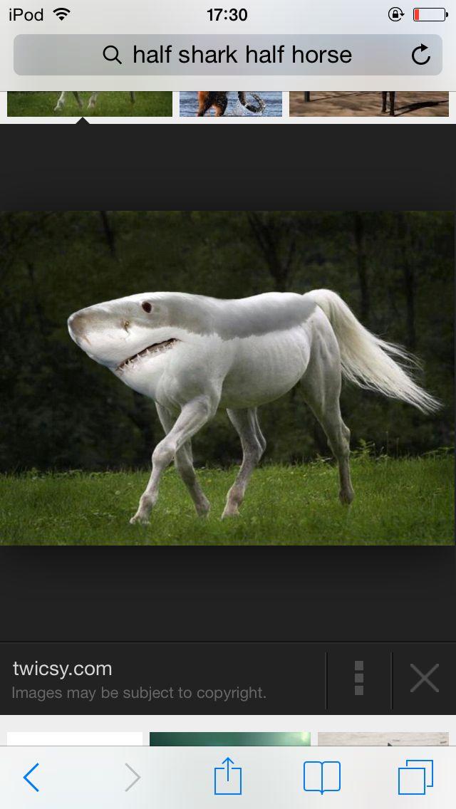 Half shark half horse - photo#6