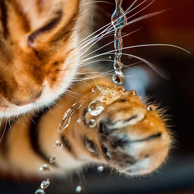 Stunning photograph capturing a cat's nature inquisitive nature