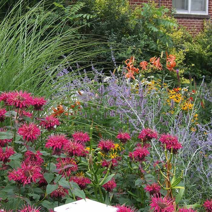 Ornamental grasses and perennial flowers landscaping mid for Gardening 4 all seasons