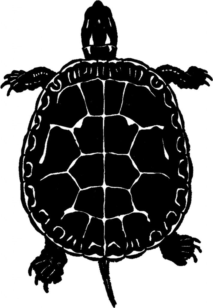 Public Domain Turtle Image - Silhouette! - The Graphics Fairy