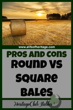 Horses | Horse Care | Horse Hay | Hay for Livestock | Explore pros and cons of feeding square bales verses round bales. Think through the different options to see what's best for you!