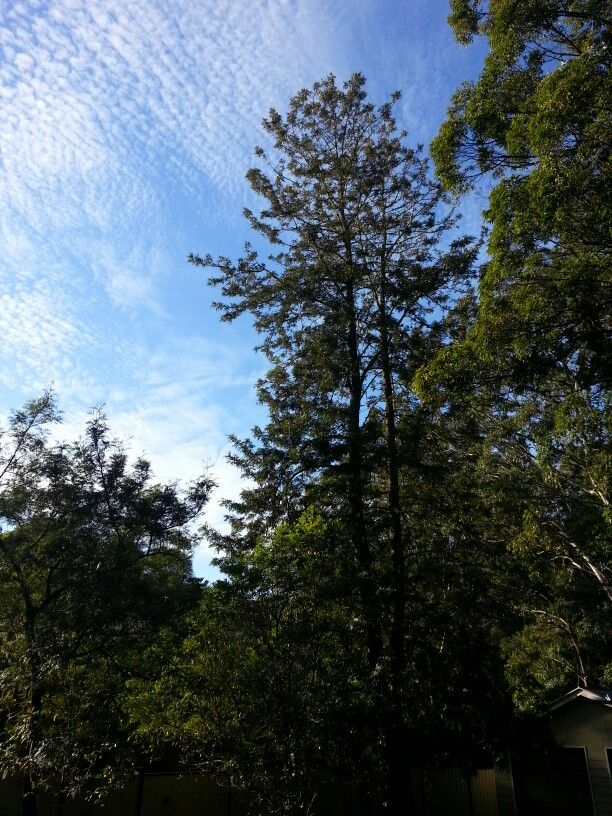 Trees and sky and fresh air.... ahhhh!