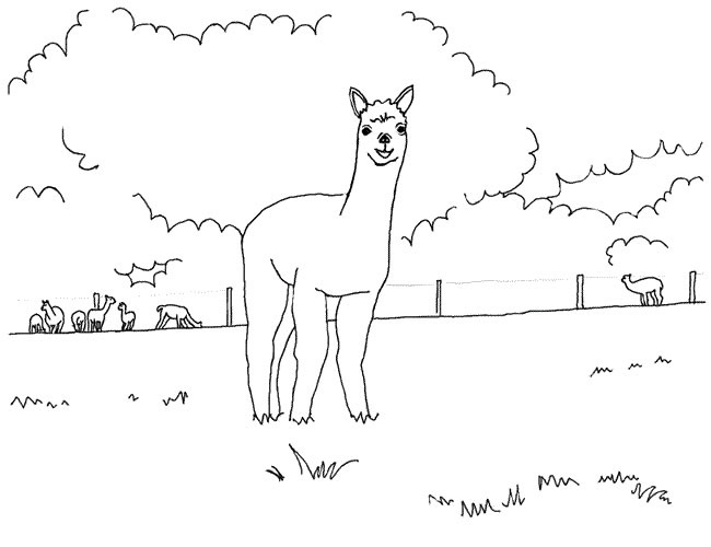 alpaca coloring pages for kids - photo#18