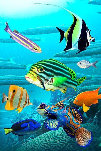 Jersey+fotoprint+37x55+cm+fisk