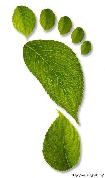 Аппликации из листьев | 56 фотографий