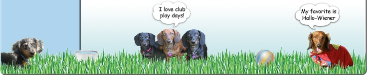 Las Vegas Dachshund Rescue and Club ...another great rescue and monthly play group.