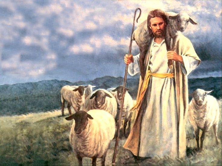 Image result for sheeps on shoulders