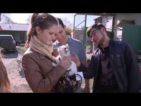 Студенты ЮУрГУ посетили приют для животных и птиц