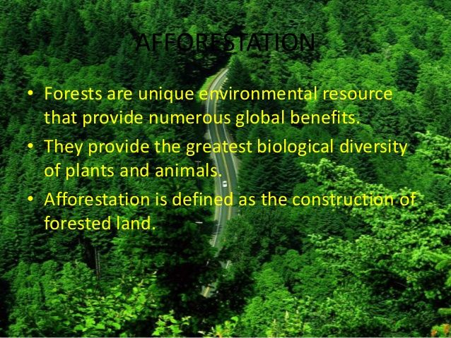 000 Learn more about afforestation & Safe Tree project here