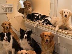 Scienza: cani e uomini hanno lo stesso cervello