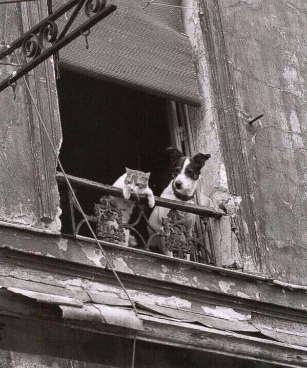 100 photos du vieux Paris
