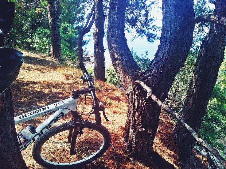 pine forest, take a break, mountain bike