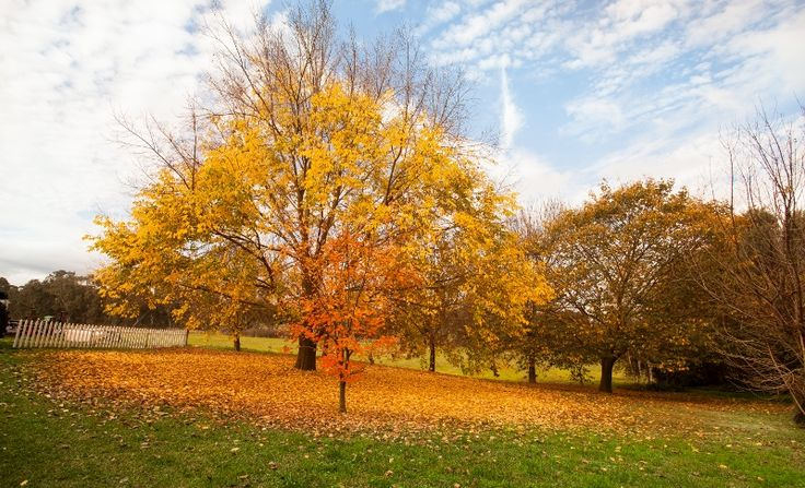 Autumn Colour at Chateau Dore - a beautiful time of year for a wedding