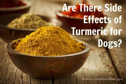 Are There Side Effects of Turmeric for Dogs? Scroll to the video.  A Vet gives great info about using turmeric for pets.