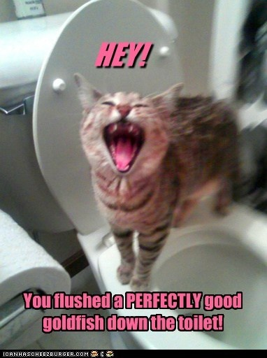 1000 Images About Bathroom Humor On Pinterest