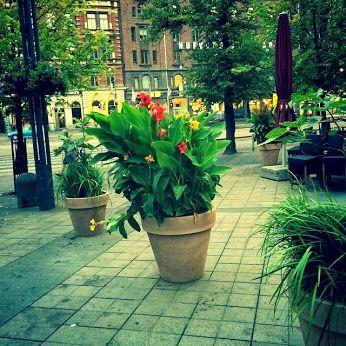 #helsinki  #street #cafe #flowers