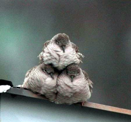 Stack o' birds