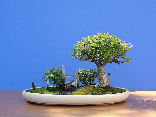 Beautiful Small Trees That You Should Put Your House With Bonsai