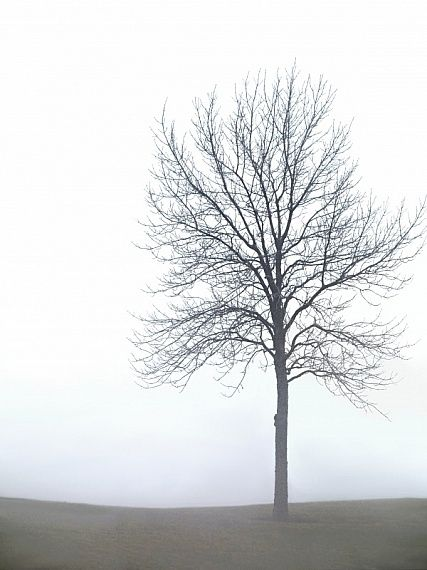pictures of trees to print | Photo Title: Foggy winter ... Pictures Trees In Winter Pinterest