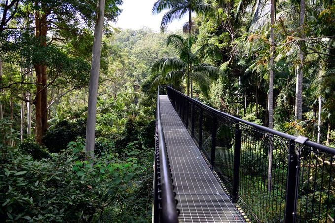 Day Tripping At Mt Tamborine | Rainforest walk about an hour south, $20 pp