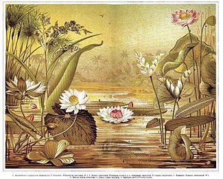 Водные растения — Википедия