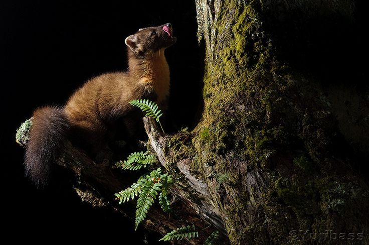 9 best Animales images on Pinterest Nature, Adorable animals and